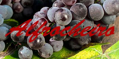 alfrocheiro-grapes
