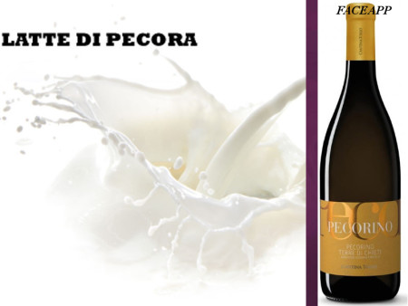 latte-pecora-gelateria-siciliana-gelarmony-1